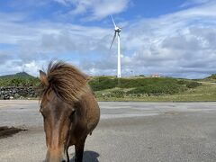 東崎へ向かいます。  が。灯台方面は馬ブロックで行けない。(ノД`)・゜・。 なんで、灯台の下へ下ります。