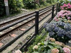 御霊神社:線路沿いの鉢植えの紫陽花。