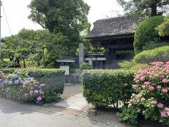 極楽寺:門の手前の紫陽花が満開。