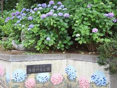 そこから徒歩1分で多摩川台公園 カタツムリ像とあじさい絵