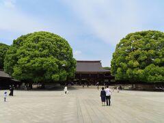 ご社殿の前に 素晴らしい木に育ったクスノキ   100年も経つと 立派に御神木ですね