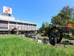 日を改めて6月1日、旭川市内の男山酒造を訪れました。4tra旅行記で、素晴らしい藤園の藤の花がたくさん紹介されていましたが、こちらにも細々とですが、藤があります。地元新聞に見頃と言う記事が載っていたので、すぐに足を運びました。