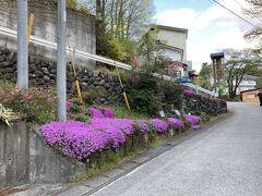赤城神社を通り過ぎて、坂を登ってきた  芝桜がきれいだ  この付近の方が営業している大きめのホテルが多そうだ