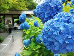 お隣の明月院へ向かいます。  『明月院』 明月庵は、山内首藤経俊により1160年創建。  北鎌倉駅ホームにも掲示されていましたが、 *6月1日~6月30日まで平日のみ開門(土日は終日閉門)