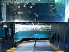 箱根水族館にも行きました(箱根園内)。 https://www.princehotels.co.jp/amuse/hakone-en/suizokukan/ 海抜723m。日本で一番標高の高いところに在る水族館です。何とPHOは4日前に日本で一番標高の高いところに在る動物園、草津熱帯圏に行ったばかりw が、14時過ぎてから入館するとショーは全て終わっていて、同じ入館料(勿論クーポンを使って値引きになってはいますが)ってどうよ?と思いました。どうにも貧乏性でf(^^;