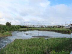 那覇空港からもほど近く与根の三角池です。周りも芦原で、護岸されているわけでもなく、ちょっといい感じにも見えます。 有名な探鳥地で、シギやサギがたくさん見られる小さな池と聞いていましたが…  「くさい、ここ」 「池というより…ドブ川だね」 「こんなところに鳥さんいるの?」  まあ……夏場はあまりお勧めしません。生活排水流れ込んでるみたいな泡だらけですし、よく言っても沼です。
