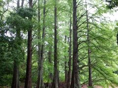 トトロの森 篠栗九大の森