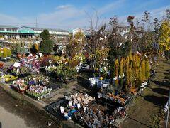 バラ園が有名な、西尾市憩いの農園。 無料できれいなバラが見られる人気スポットだけど、訪れた2月は殺風景で苗木や農産物直売所を見ただけ。