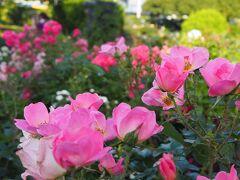 お昼ねの後は、もう一度バラやラベンダーを見てから帰ります。