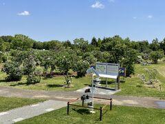 3つ目の公園は★「川下公園」★  ここは知る人ぞ知る「ライラック公園」 百合が原公園などはいろんな花がありますが、ここは本当にライラックだけ!