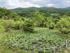 さて、今日はもう一カ所。 山の上庭園へ。 以前新聞でエーデルワイスの苗がたくさん植えられたという記事を読んでいて寄ってみました。  まぁまぁのくねくね道を、そろそろ心細いなぁと進むといきなり到着!(道中1台もすれ違わず・・・)