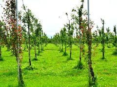 弘前リンゴ公園 http://www.city.hirosaki.aomori.jp/ringopark/ https://www.hirosaki-kanko.or.jp/web/edit.html?id=ringopark  今の時期はお花も終わり、リンゴが実るまでの中途半端な時期と言えばそうなんだけどね(笑)
