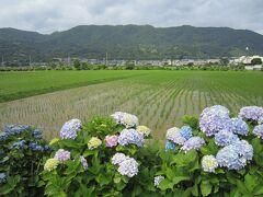 山の下を走るのが「東名高速」で、右側の山の中腹にある白い丸い建物あたりが「松田山ハーブガーデン」 春は桜が有名な場所です。