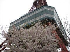 札幌は桜が満開!  中央バスさんのバスターミナルを見学。 https://youtu.be/tRlXZKup8xc