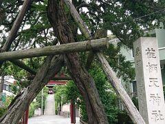 次に、「荏柄天神社(えがらじんじゃ)」の前、 を通ります。 高く伸びた立派は神木が支え合い、鳥居のようになっていて神秘的。石碑は「荏柄天神碑」です。