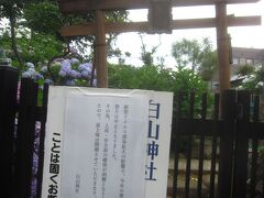 白山公園の前(神社の裏)にある富士塚はあじさいまつりの時だけしか解放されていないそうですが、今年はコロナの影響で閉鎖されています