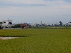 道隆寺を出て丸亀市の県道を走ります。稲刈り前の水田のむこうにJRが並行して走っています。しばらくのどかな風景が続いて丸亀市の中心部に入りました。