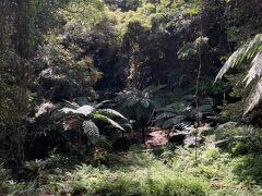 裏見ヶ滝へ! 一歩足を入れると、すでにジャングル!!
