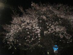 で、暗くなってから実家を出発。  搭乗は翌朝の便なので、この日は取り敢えず空港に着けば良い訳で、密を避けたいという意味からも、敢えて遅い時間に出発。  最後にもう一度、香流川の夜桜を眺めて…。  今度こそ本当に、ここの桜さん達との本年のお別れ。  また逢えますように…。