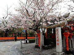 以前なら、桜の季節の辰巳大明神なんて、近寄るのも恐ろしい程に、人人人!! 人だらけだったのに、画面に人が写りこまないこともチラホラあるほどの人出で。