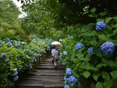 ランチ後は北鎌倉にある明月院に行きました。 明月院は日本古来からあるヒメアジサイが咲き誇り、明月院ブルーと呼ばれています。 拝観料は500円です。 混雑回避のため、今年は土日は閉門しているそうです。 平日に有休取って来てよかったです♪