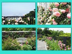 元町・中華街駅から港の見える丘公園までは歩いて5分くらいですが、駅を出てすぐのアメリカ山公園も薔薇や初夏の草花が満開。遠くにはベイブリッジも見えたので、ちょっと寄り道。