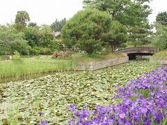 ●浜寺公園  ここまで、花を手入れされている公園とは思わなかった…(失礼!) やりよったな…浜寺公園(笑)。