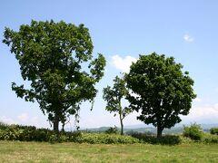『親子の木』の近くを通る。 しかし、近くで見ると、思ったよりもみすぼらしかった。