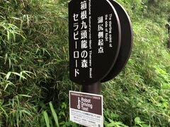 そのまま湖畔沿いにセラピーロード歩きます。ここから箱根神社方面はまあまあ人がいました。