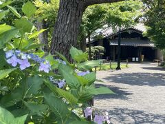 つぎに来たのは、桜の名所、堀田邸庭園