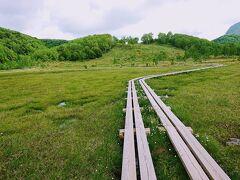 レンゲツツジの次は、湿原のワタスゲです。