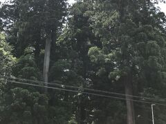 駐車場から道路を隔てた向かい側に、伊和神社の立派な杉が見えました。 播磨三大社の一社で、農・工・商業等産業そして交通安全の神として多くの方から崇敬されているそうです。