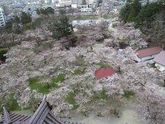 桜が五分咲きぐらいです 桜の時期に旅行に来れて嬉しいです