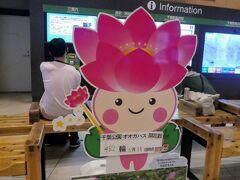 千葉駅に到着。 本日の目的はpicotabiさんの行ったレトロ喫茶とさや堂ホール、それに見ごろと言われている千葉公園の大賀ハスです。 この子はえきにいるシンボルキャラクターのちはなちゃん。 大賀ハスの開花状況を伝えているようですが、それ一昨日だよ・・・さぼったな!