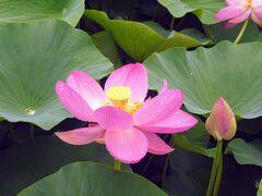 人間の都合に関係なく花は美しい。