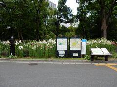 公園内に入ると目の前一面にユリの花が咲き誇っていました。