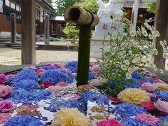 紫陽花とダリア、カーネーション、薔薇の花手水。
