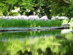 水に映る緑もキレイ~。