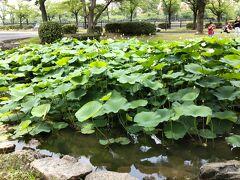 藤田邸庭園から出て川沿いを歩きます