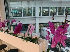 無事に那覇空港に到着です  この蘭の花を見ると沖縄って感じです