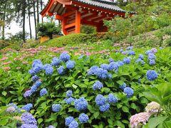 山門と紫陽花。