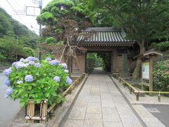 鎌倉ドライブ。  まずは「報国寺」