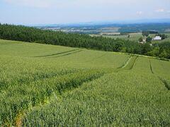 いつも通る千望峠辺りの風景。 作物は真夏の深緑へと育っている。