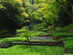 静岡ならではワサビ畑でホタル観賞