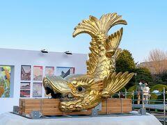 <二之丸広場:山シャチ(雄)>  いよいよ金鯱とご対面。  大きい!!!  パンフレットによると 「守り神降臨~山と海の祈り~」  こちらが山シャチ(雄) 高さ:2.621m 従量:1,272kg 金板の種類:18K 金板の厚み:0.15mm うろこの枚数:112枚 金量(18K):44.69kg  2.6mで1,300kg近くもある! 金量は44kgです、凄い!