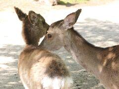 お宿からちょっと上がったところ 鹿のたまり場 藤の棚公園