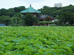 東京メトロ千代田線湯島駅を降りて、上野公園山下口へ向かう途中、不忍池の南縁沿いを歩きました。弁天堂が見えてます