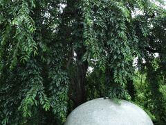 上野公園山下口。 この枝垂れ桜が咲くと絵になるんですよね