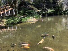 真名井の滝の上流の池がおのころ池。真ん中に小さなおのころ島がある。 おのころ島といえば国生み神話で、イザナギとイザナミが作った日本列島最初の島。 その娘が天照大神だから、天孫降臨の瓊瓊杵尊から見るとひいおじいさんの代だ。 日本神話の時間の流れを無視していることがつらい。