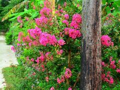 南潮庵  ブーゲンビリアは夏のお花のイメージがあるけど、夏だともう枯れてしまうのだとか。一応咲いていてはくれたけど、4月ぐらいがちょうど見頃みたいだね。